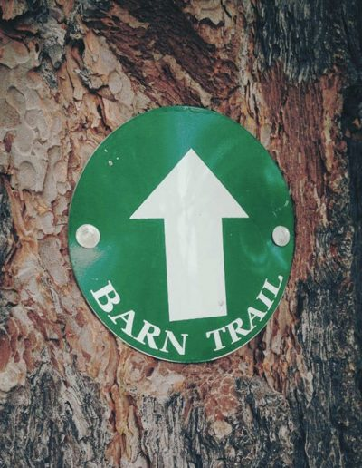 green barn trail sign with arrow pointing up nailed to a tree