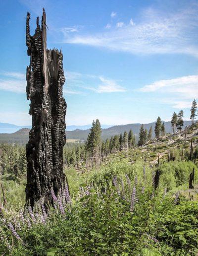 old broken down tree trunk near hiking trail